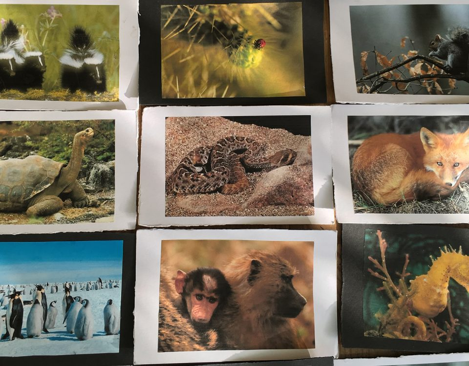 Photo of animal cards for group work